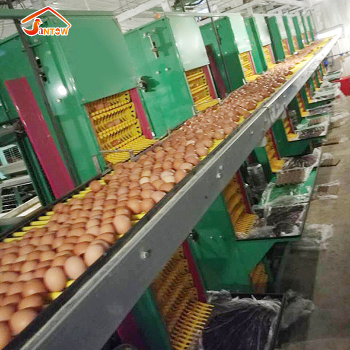 automatic egg collection machine.jpg